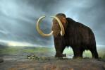 800px-Woolly_mammoth-620x411
